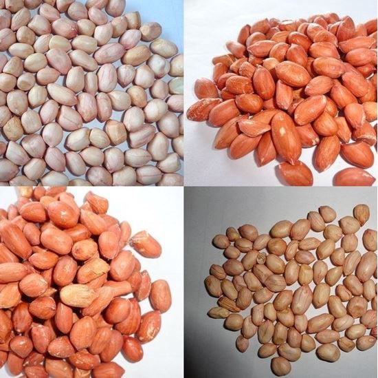 groundnuts nutrition and groundnut plant Groundnuts originated in south america from spread the disease from plant to plant and far away to other groundnut impact on nutrition and women's role.